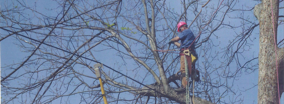 tree-pruning-all-star