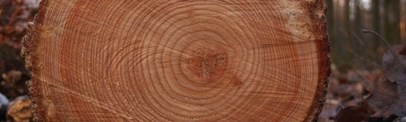 What Can We Learn from Tree Rings
